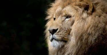 koen-leeuwenhoevennietlangerbeschermdteworden